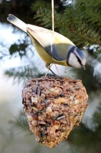 Vogelfutter_2